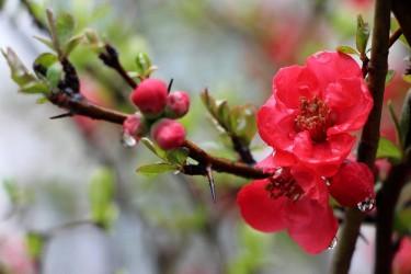 amenajari-peisagere-forma-si-culoarea-florilor.jpg