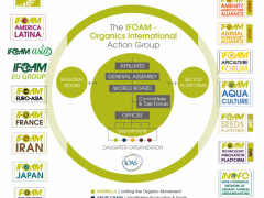 ifoam-organizational-diagram-revised2.png